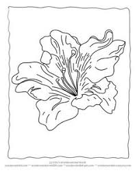 Flower Coloring Sheets Lily Wonderweirded Wildlife Free Printable Pages