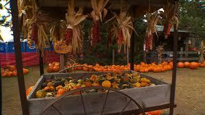 Pumpkin Patch Sacramento by Wcco Viewers U0027 Choice For Best Pumpkin Patch In Minnesota Wcco