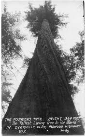 Click To Enlarge The Giant Founders Tree Became A Symbol Of Something Much Larger During World War II