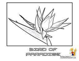 Tropical Flower Bird Of Paradise At YesColoring Coloring Sheet