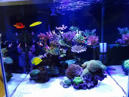 Show Off Those Great CUBE TANK AQUASCAPES! | REEF2REEF Saltwater ... Home Design Aquascaping Aquarium Designs Aquascape Simple And Effective Guide On Reef Aquascaping News Reef Builders Pin By Dwells Saltwater Tank Pinterest Aquariums Quick Update New Aquascape Of The 120 Youtube Large Custom Living Coral Nyc Live Rock Set Up Idea Fish For How To A Aquarium New 30g Cube General Discussion Nanoreefcom Rockscape Drill Cement Your Gmacreef Minimalist 2reef Forum