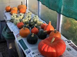 Pumpkin Festival Maine by Gourd Fruits Crossword Best Fruit 2017