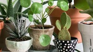 plantes vertes d interieur plante d intérieur originale les bonnes idées côté maison