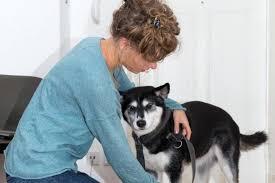 mit dem hund zu besuch knigge für tierische gäste