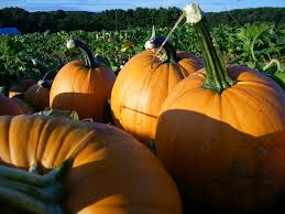 Pumpkin Patches Maryland by Deep Run Farms Featured In Usda Blog Pumpkin Patch Maryland