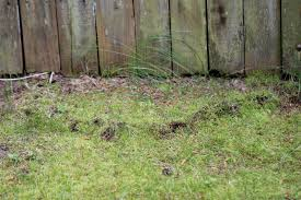 C. Creativity: Life In Macro: Holy Mole-y! How To Get Rid Of Moles Organic Gardening Blog Cat Captures Mole In My Neighbors Backyard Youtube Animal Wikipedia Identify And In The Garden Or Yard Daily Home Renovation Tips Vs The Part 1 Damaging Our Lawn When Are Most Active Dec 2017 Uerstanding Their Behavior Mole Gassing Pests Get Correct Remedy Liftyles Sonic Molechaser Alinum Covers 11250 Sq Ft Model 7900