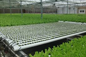 Nft Hydroponic System   Aquaponics FREE Plans Hydroponic Home Garden Backyard Food Solutionsbackyard Oc Aquaponics Project Admin What Is Learn About Aquaponic Plant Growing Photos Friendly Picture With Amusing Systems Grow 10x The Today Bobsc Ezgro Amazoncom Vertical Gardening Vegetable Tower Indoor Outdoor From Fish To Ftilizer Greenhouse Im In My City Back Yard Yes I Am Satuskaco