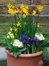 how to plant a container garden hgtv
