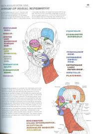 Whats Up Wit Anatomy Coloring Book Muscles With Courses Of