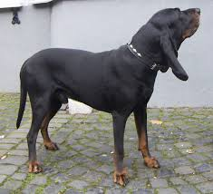 Guard Dogs That Dont Shed by These Dog Breeds Are The Biggest Droolers