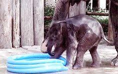 Baby Elephant In A Kiddie Pool