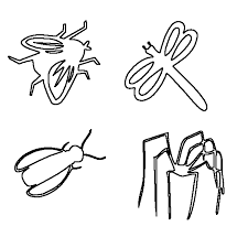 Popular Insects Coloring Pages Best And Awesome Ideas
