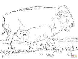 Click The American Bison With Calve Coloring Pages To View Printable