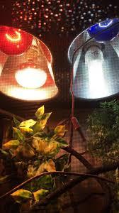 Basking Lamp For Chameleon by Interacting Taming A Baby Veiled Chameleon Chameleon Forums