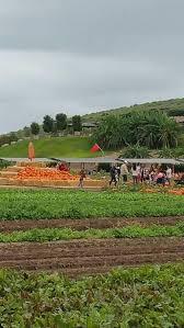 Tanaka Farms Pumpkin Patch by Tanaka Farms Pumpkin Patch Irvine Ca