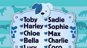 popular cat names jake most popular cat names today