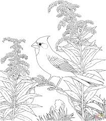 Northern Cardinal Coloring Pages Best Of Bird For Adults