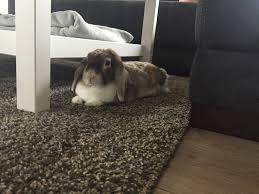 kaninchenstall selber bauen bauanleitung für die wohnung