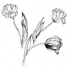 Tulipe Dans Un Pot Kiddicoloriage