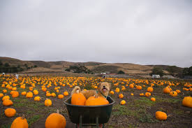 Half Moon Bay Pumpkin Patches 2015 by Ally Egge