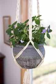100 Blooming House 24 Flowering Plants That Can Grow Indoors