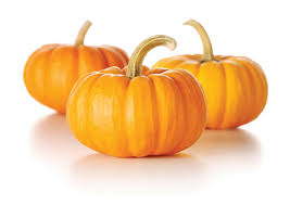 Pumpkin For Pets Diarrhea by The Power Of Pumpkin For Dogs Animal Wellness Magazine