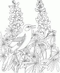 Beautiful Birds And Flowers Coloring Books Free