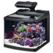 aquarium nano eau de mer aquarium d eau de mer debutant 28 images photos aquarium eau