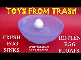 Bad Eggs Float Or Sink In Water by Fresh Egg Sinks Rotten Egg Floats English 15mb Wmv Youtube