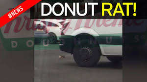 Huge Rat Runs Off With Krispy Kreme Doughnut Across Car Park As ... Huge Rat Runs Off With Krispy Kreme Doughnut Across Car Park As Nike Teams Up With Krispy Kreme For Special Edition Kyrie 2 From The Ohio River To Twin City North Carolina Nike And Make For An Unlikely Sneaker Collaboration Greenlight Colctibles Hitch Tow Series 4 Set Nypd Doughnuts Plastic Delivery Truck Van Coffee Tea Cocoa Close Blacksportsonline Amazoncom 164 Hd Trucks 2013 Intertional Full Print Freightliner Sprinter Wrap Car