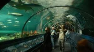 aquarium geant a visiter belgique harbour l ancien port et l aquarium de sydney australie