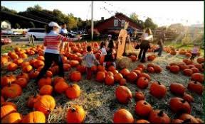 Pumpkin Picking Nj by Best Pumpkin Picking Places Things To Do In Jersey City Jcfamilies