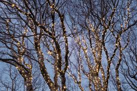 How to Put Christmas Lights on Tall Outdoor Trees
