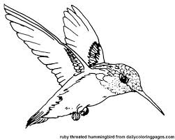 Spectacular Design Coloring Page Of A Bird Printable Color Picture Hummingbird Texas Ruby Throated Pages
