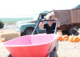Half Moon Bay Pumpkin Patch 2015 by October Versions Of Us Momma U0027s Gone City