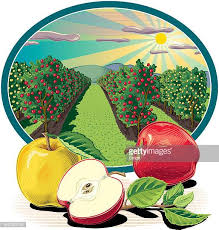 Apple Orchard Stock Illustrations And Cartoons