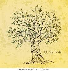 Olive tree on vintage paper Olive oil
