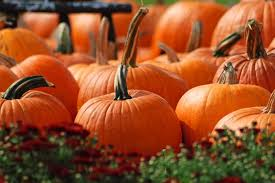 North Lawrence Pumpkin Patch by 10 Great Pumpkin Patches In Texas