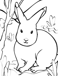 Rabbit Coloring Pages Printable Animals