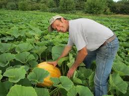 Free Pumpkin Farms In Wisconsin by Meuer Farm Corn Maze Meuer Farm Llc