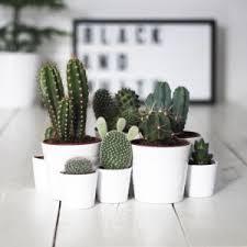 plante de bureau plante pour bureau sans entretien florideeo