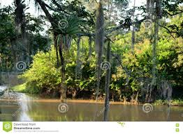 100 Pau Brazil Beautiful Afternoon At The Park Dgarlic In Guararema