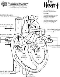 Free Printable Anatomy Coloring Book The Heart Lung Liver Intended For Pages 2