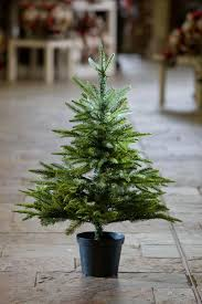 Potted Christmas Trees For Sale by Christmas English Pine Pottedmas Awesome Real Tree Sale Home