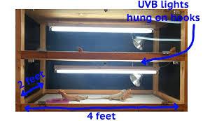 Bearded Dragon Heat Lamp Timer by Care Sheet U2014 Herebdragons Com