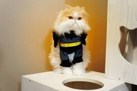 cat batman costume which batman are you most like playbuzz