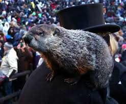 Pas Pumpkin Patch Punxsutawney by 52 Best Another Day Another Celebration Images On Pinterest