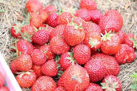 erdbeeren einfrieren so machen sie die süßen früchte