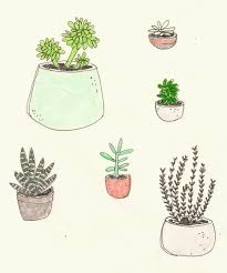 Boho Cactus Drawing Indie Plants Vintage