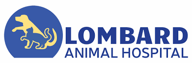 lombard animal hospital the excitement continues at lah